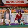 Nejlepší vystavovatelé - boloňský psík