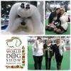 World Dog Show Budapest 2013