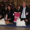 Euro Dog Show Geneva 2013