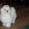 MINOR PUPPY CLASS Lux Bacarro Oxalis - Very promising 1, Best Baby