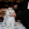 PUPPY CLASS Ema Alfrédo Vy-Mia - Very promising 1, Best Puppy