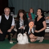 JUNIOR CLASS Blanche Bibbi Maltese z Králova Pole - Exc. 1, CAJC, New Club Junior Champion