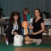 INTERMEDIATE CLASS Beatrix Sissi Maltese z Králova Pole - Exc. 1, CAC, Best female