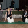 Best of Breed Competition