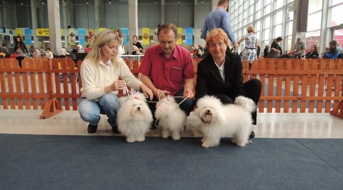 Mezinárodní výstava psů Opole