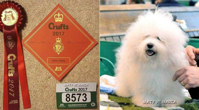 Úspěch na Crufts 2017